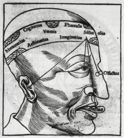 G. Le Lièvre (1520): Memory, imagination, cognition and the senses